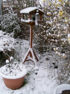 bird table in snow, 6th april